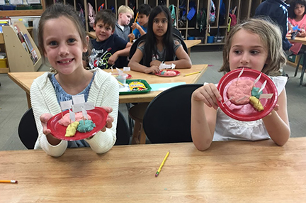 students make models of the brain out of clay